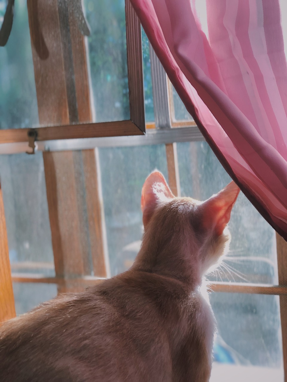 cat,window